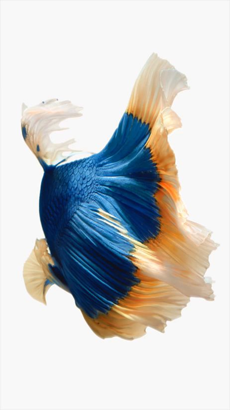 Grab Hold Of the Unbelievable iPhone Fish Live Wallpaper