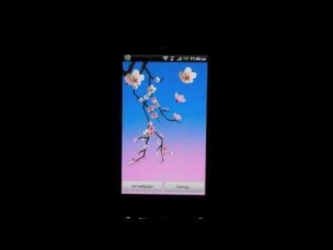 lovely sakura live wallpaper video